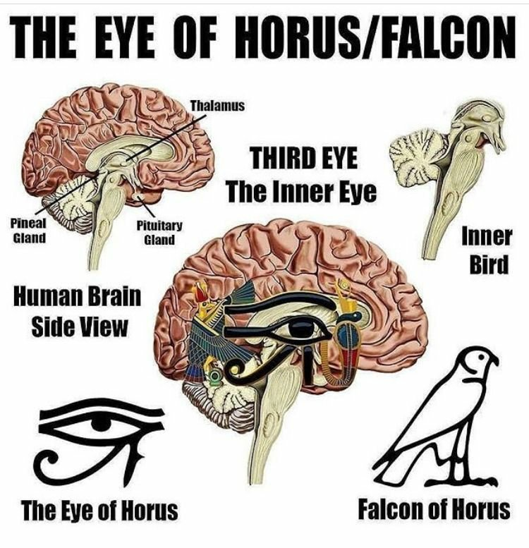 the ancient egyptians knew how to unleash the power of the pineal gland _ ancient code1034145415..jpg